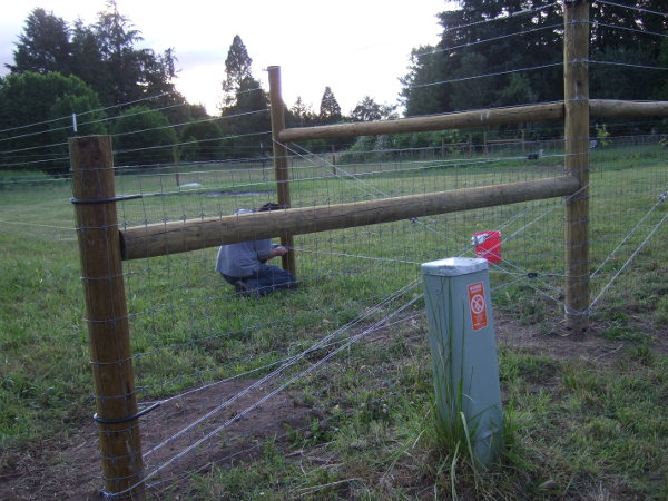Hot wire and temporary gate | Farm Folly