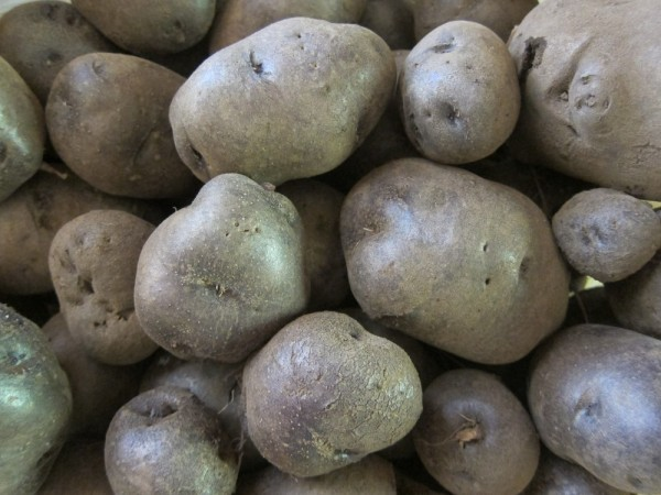 All Blue potatoes